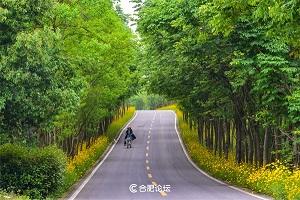 蜀山区精选国庆旅游休闲线路――六条线路一网打尽秋日风光