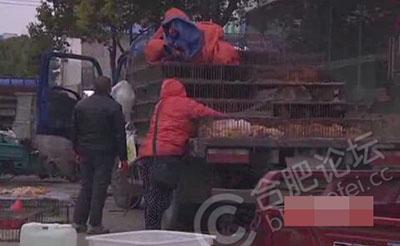 【曝光】中菜市现多家活禽摊点!就在路边售卖
