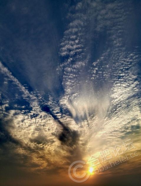 合肥植物园三面环水,朝晖夕阴,风景优美如画!
