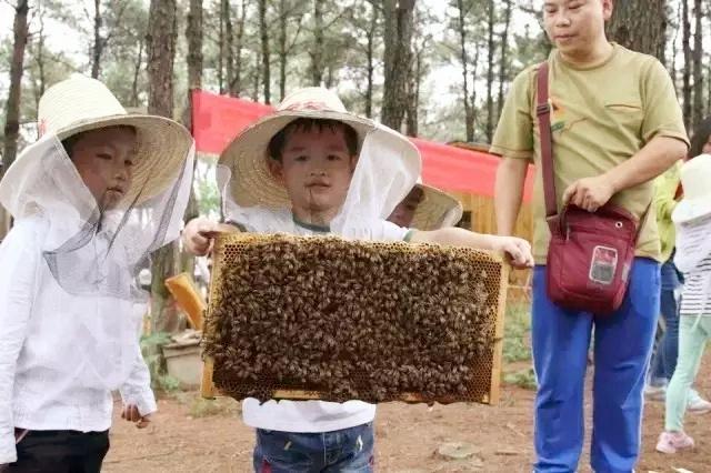 """探秘""""蜜蜂王国""""寻蜂行动、打蜂蜜、做稻草人、磨豆浆、吃大锅饭啦!【4.2】"""