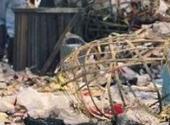一天消化3万吨城市生活垃圾