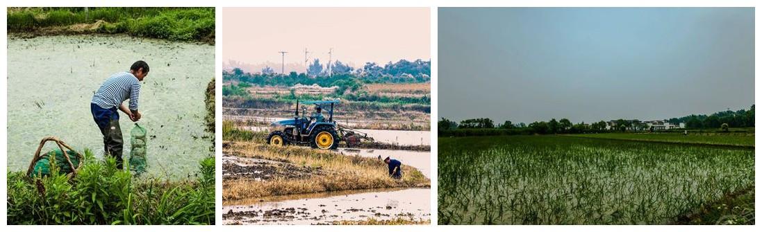 【实拍】乡村六月随拍 收货的季节