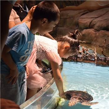 《宝宝生日会》百组家庭畅游芜湖大白鲸海洋公园归来!