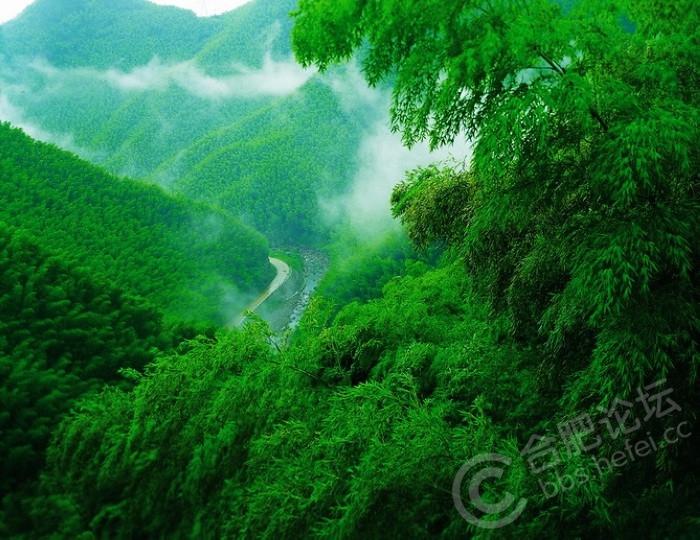 竹海仙境.jpg