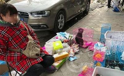 【遭遇】街头贩卖荷兰猪,买回来两天就死了